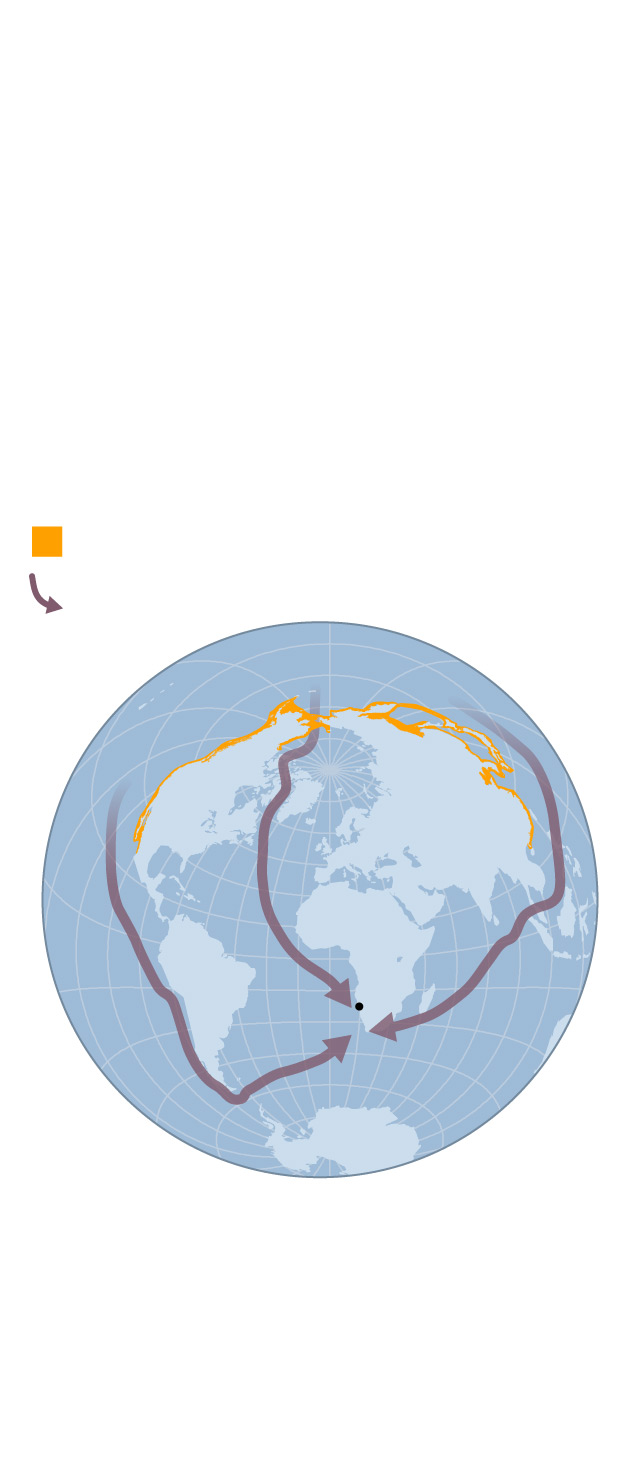 nganimals-2106-longest-whale-migration_primary_ai2html-mobile.jpg